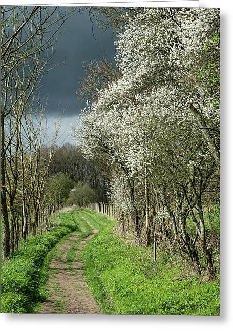 Footpath In Stormy Weather In Spring English Countryside Landsca Greeting Card
