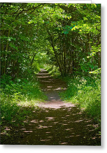 Lead Pyrography Greeting Cards - Footpath lined with hazel. Greeting Card by Kathleen Smith