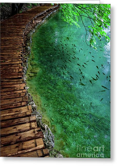 Footpaths And Fish - Plitvice Lakes National Park, Croatia Greeting Card