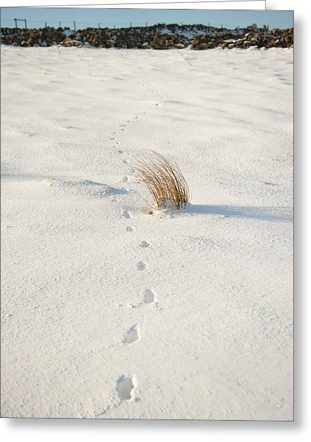 Footprints In The Snow II Greeting Card