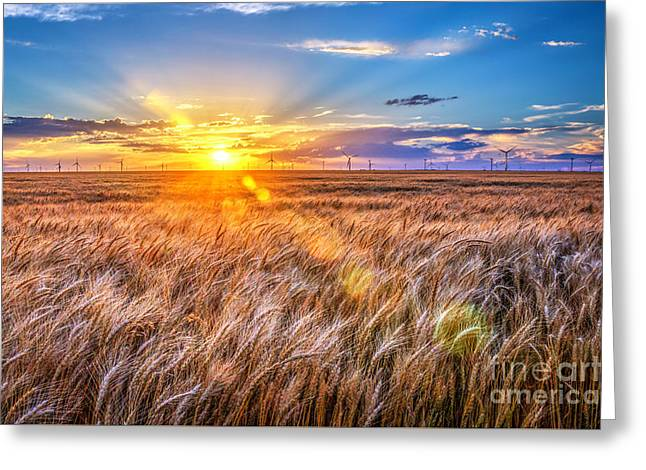For Amber Waves Of Grain Greeting Card by Jean Hutchison