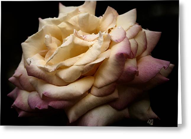 For Rose Lovers Greeting Card