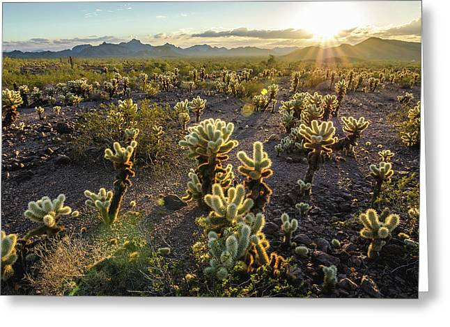 Sea Of Cholla Greeting Card