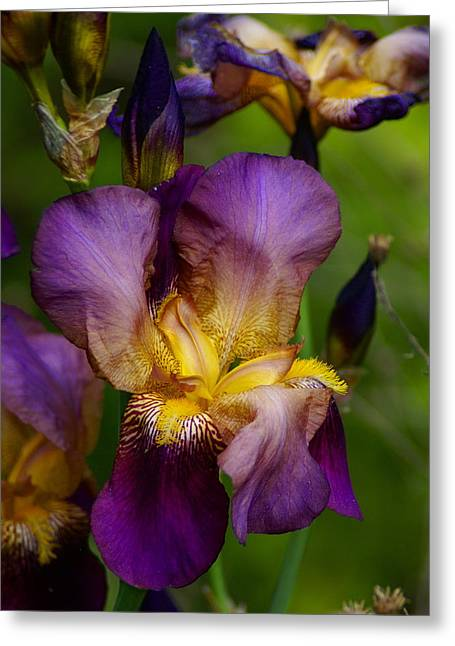 For The Love Of Iris Greeting Card by Ben Upham III