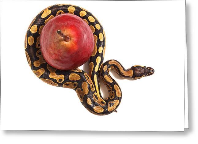 Forbidden Fruit Greeting Card by John Mueller