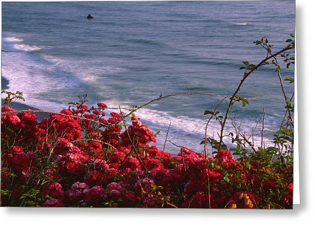Foreground Element Greeting Card by Soli Deo Gloria Wilderness And Wildlife Photography