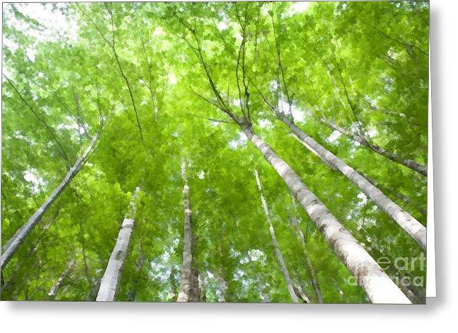Greeting Card featuring the photograph Forest 1 by Jean Bernard Roussilhe