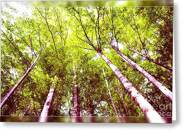 Greeting Card featuring the photograph Forest 2 by Jean Bernard Roussilhe