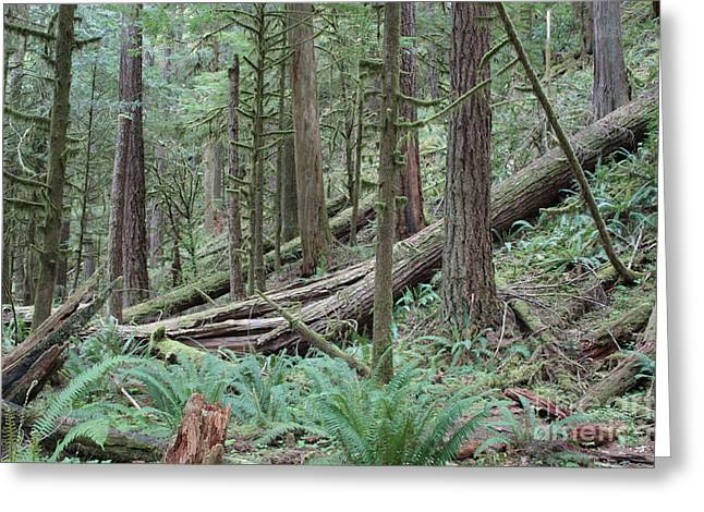 Forest And Ferns Greeting Card by Carol Groenen