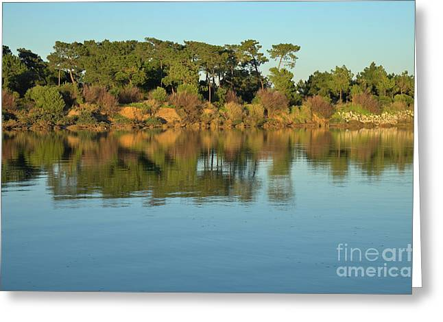 Forest And Reflections Greeting Card by Angelo DeVal