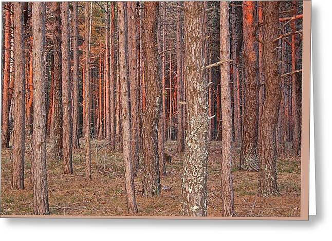 Woodlandst At Dusk Greeting Card by Debbie Auclair