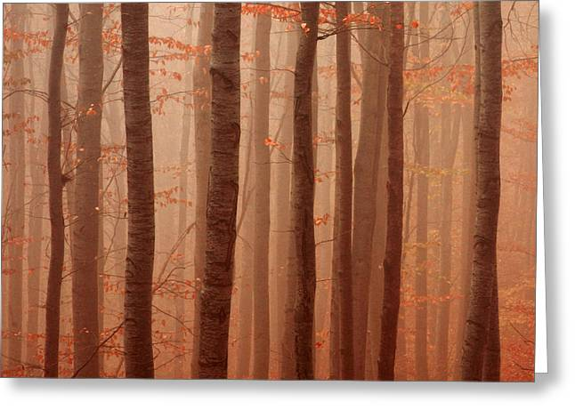 Forest Barcode Greeting Card by Evgeni Dinev