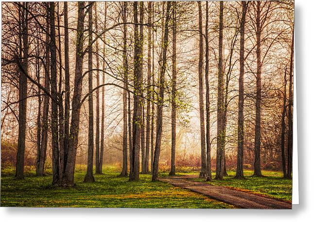 Forest Beauty Greeting Card by Debra and Dave Vanderlaan