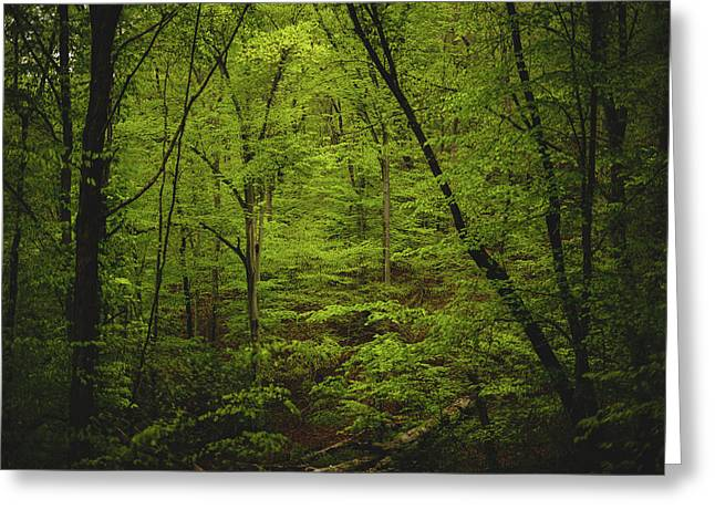 Greeting Card featuring the photograph Forest Beckons by Shane Holsclaw