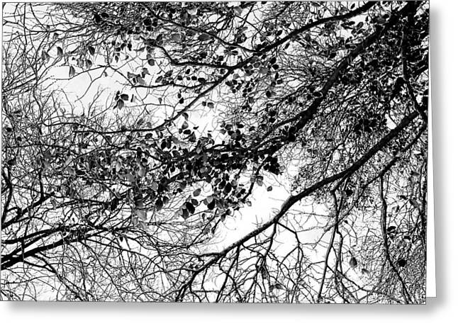 Forest Canopy Bw Greeting Card