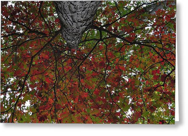 Forest Canopy Greeting Card by JAMART Photography