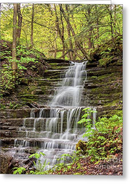 Forest Cascade Greeting Card
