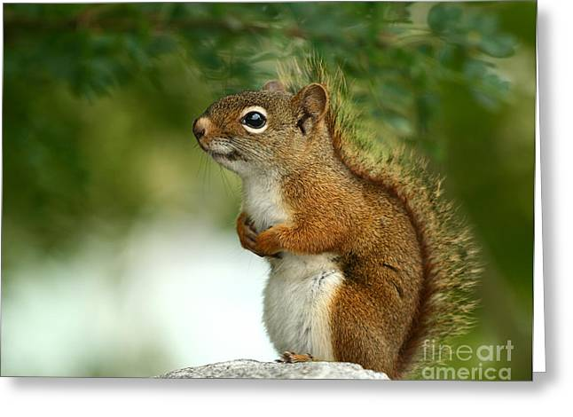 Forest Critter Greeting Card