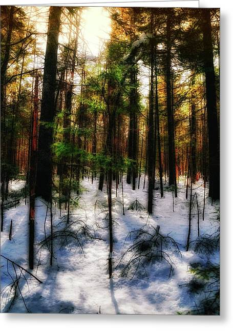 Forest Dawn Greeting Card