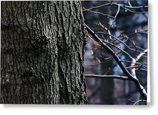 Forest Decor Greeting Card by Scott Hovind