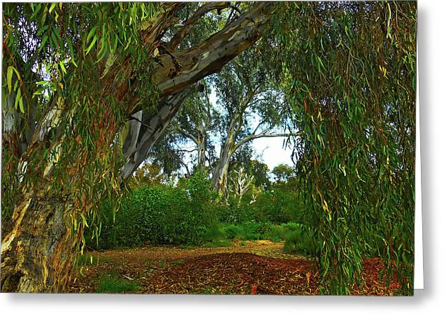 Greeting Card featuring the photograph Forest Dreams by Mark Blauhoefer