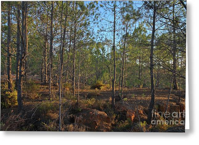 Forest During Sunset Greeting Card by Angelo DeVal