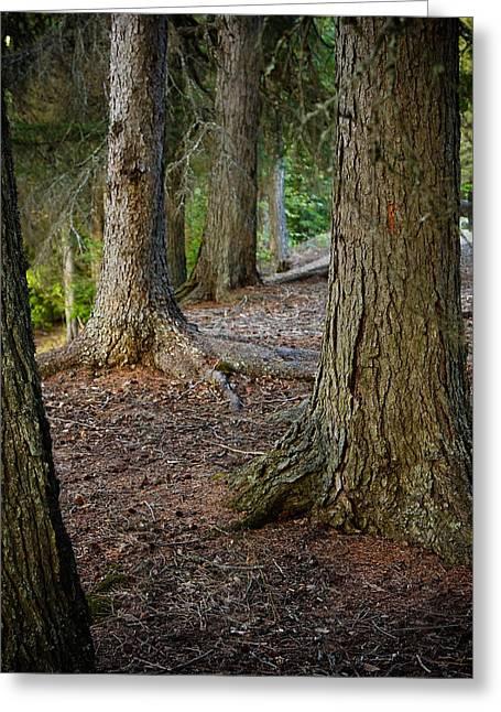 Forest Feet Greeting Card by Jon Woodbury