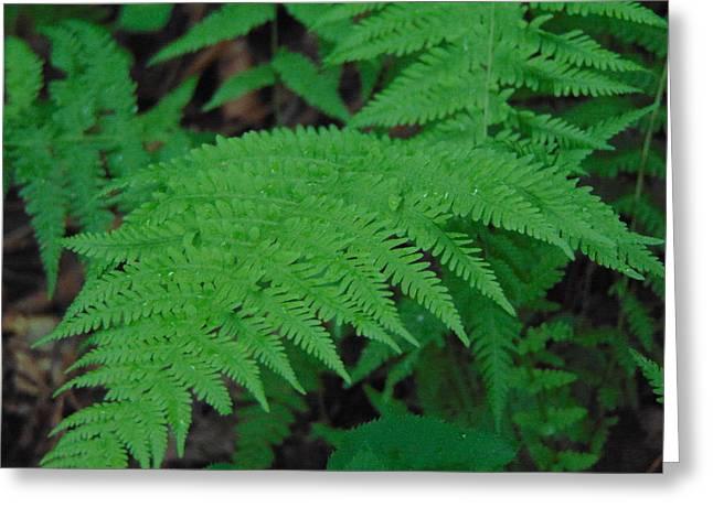 Forest Fern Greeting Card