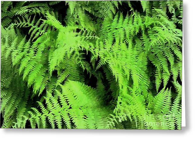 Forest Ferns 3  Greeting Card