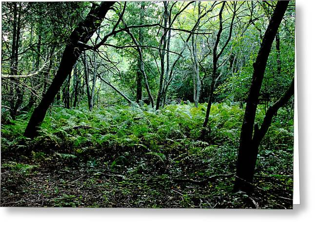 Forest Ferns Greeting Card by Debbie Oppermann