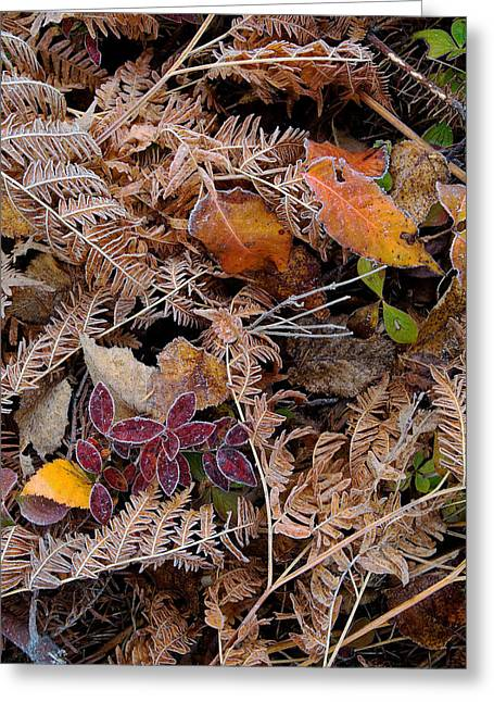 Greeting Card featuring the photograph Forest Ferns by Doug Gibbons