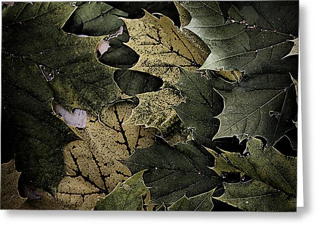 Forest Floor - Leaf 12 Greeting Card by Pete Hellmann