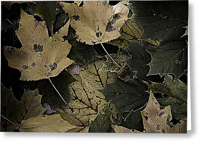Forest Floor - Leaf 13 Greeting Card by Pete Hellmann