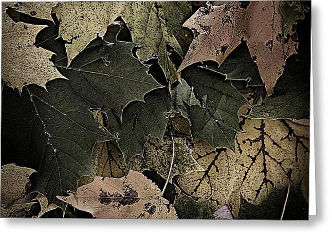 Forest Floor - Leaf 14 Greeting Card by Pete Hellmann