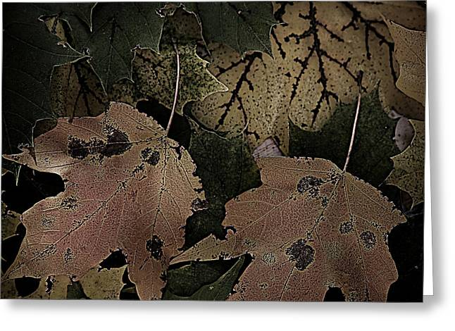 Forest Floor Greeting Cards - Forest Floor - Leaf 15 Greeting Card by Pete Hellmann