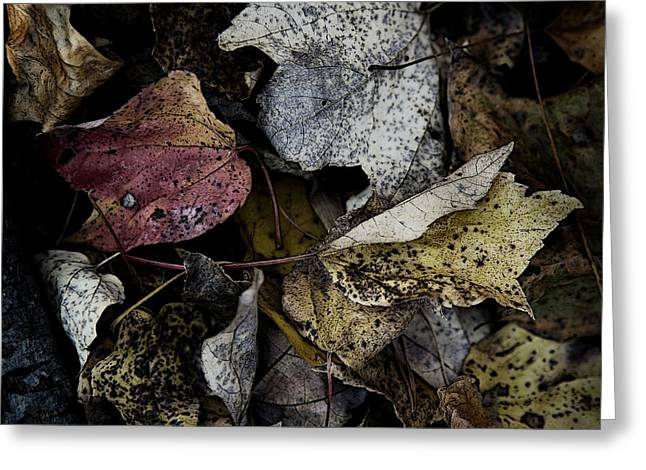 Forest Floor Greeting Cards - Forest Floor - Leaf 6 Greeting Card by Pete Hellmann