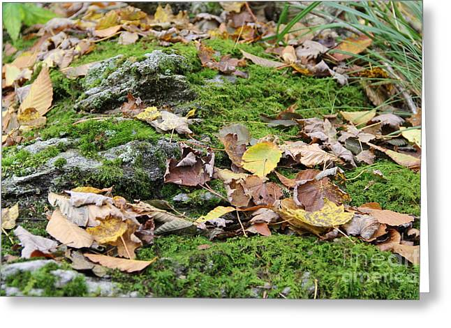 Forest Floor Greeting Card