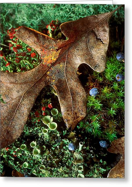Forest Floor Detail Greeting Card by Lloyd Grotjan