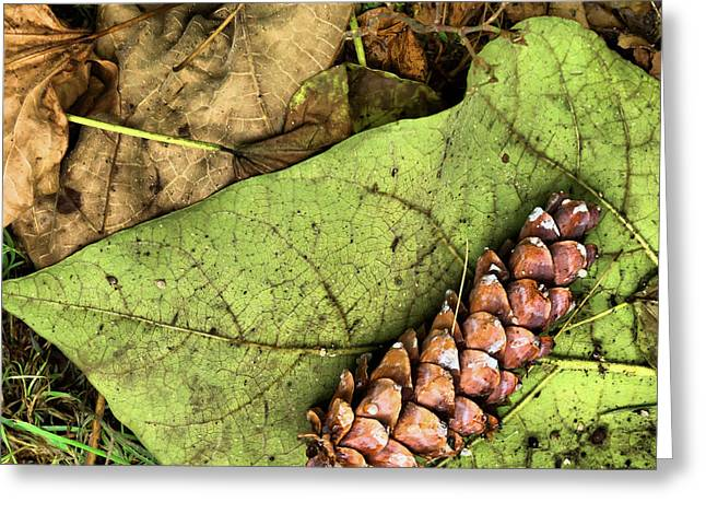 Forest Floor Still Life Greeting Card