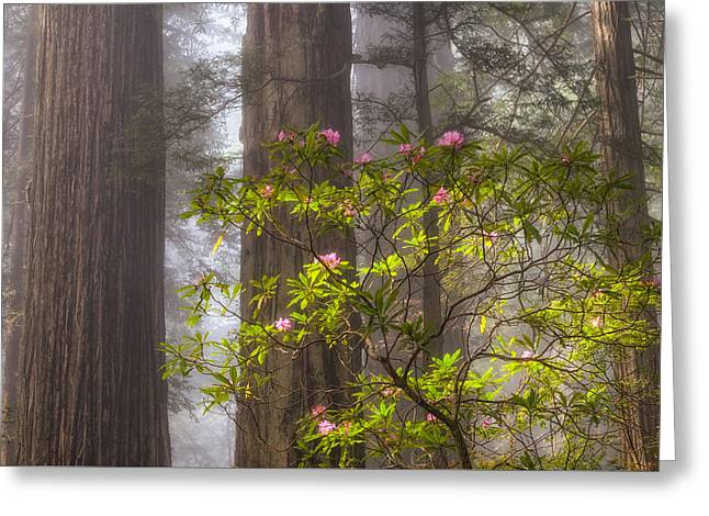 Forest Fog And Blooms Greeting Card by Patricia Davidson