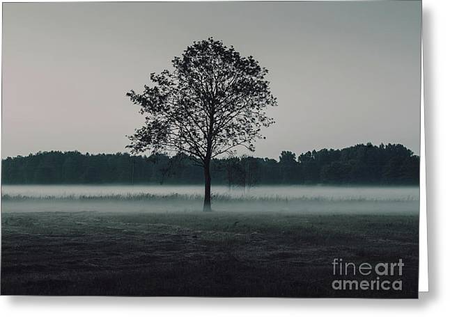 Forest Fog Greeting Card by MGL Meiklejohn Graphics Licensing