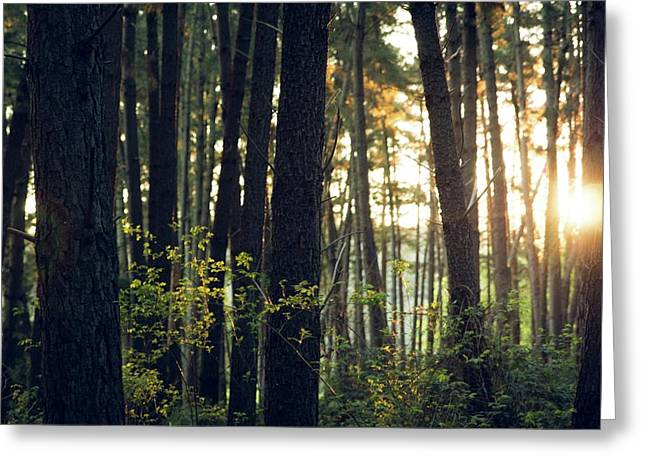 Forest Haven Greeting Card by Run With Jay