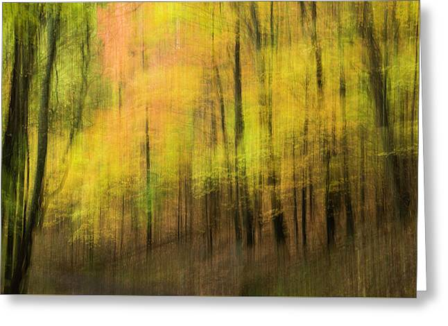 Greeting Card featuring the photograph Forest Impressions by David Waldrop