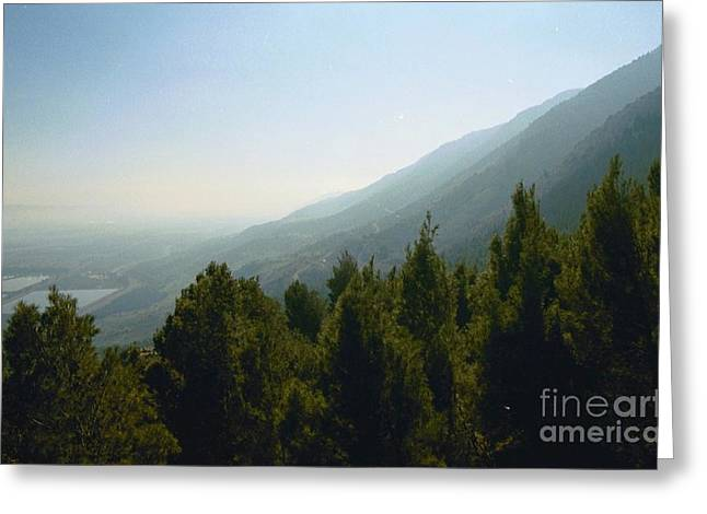 Forest In Israel Greeting Card