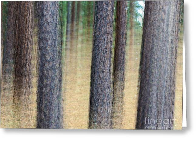 Trees Greeting Card by Terry Garvin