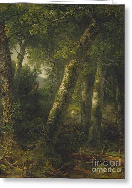 Forest In The Morning Light Greeting Card