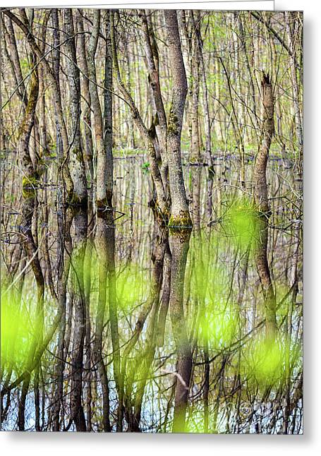 Forest In The Swamp Greeting Card