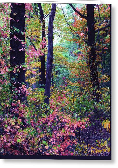 October Forest Greeting Card by Jessica Jenney