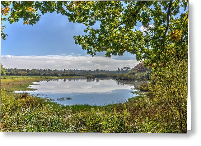 Forest Lake Through The Trees Greeting Card