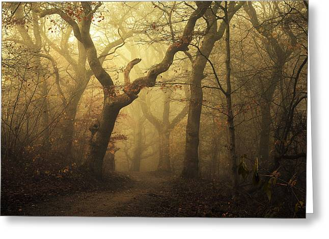 Forest Greeting Card by Leif L?ndal